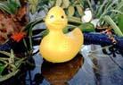 Titus A. Ducksbottom