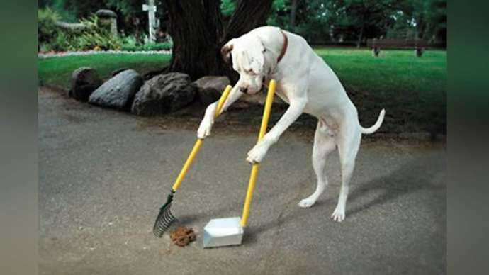 image for Dogs To Be Trained To Pick Up Their Own Turds