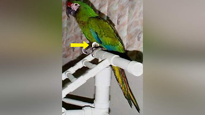 image for Catastrophic End to World Signaled by Parrot's Death