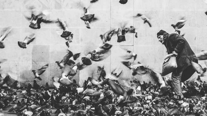 image for Cat Put Amongst Pigeons