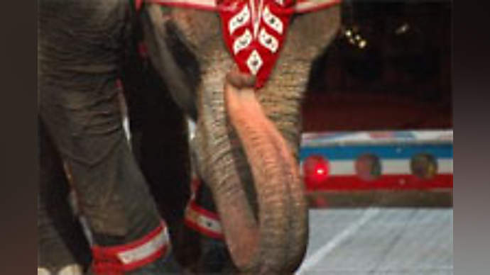 image for Elephant in the room sighs and relieves itself over wide expanses in the news studio