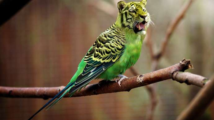 image for The Wonderful World Of Uninteresting Animals #7: The Saber-toothed Budgerigar