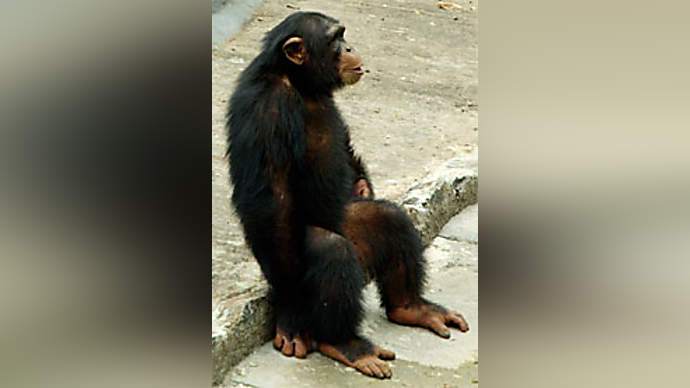 image for Chimpanzee Plastic Surgeon Team Killed While Performing Face Lift