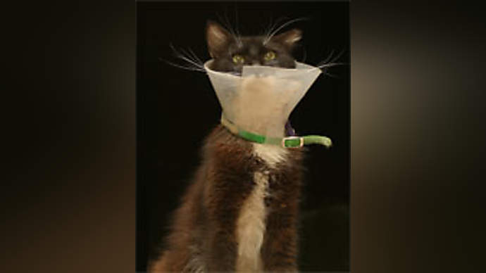 image for Cats compete to get Most Popular news story on the BBC website