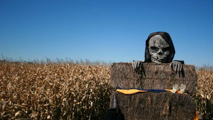image for Don't Feel Up To Carving And Cleaning Your Pumpkins This Halloween? Let Vegan Zombies Do It For You!