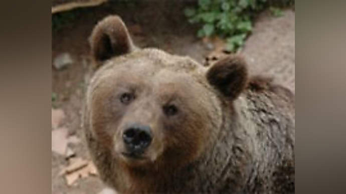 image for Colorado Bear Gripes About Bad Experience in Local Bar