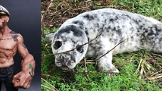 image for Baby seal ends up in back of smelly restaurant miles from sea