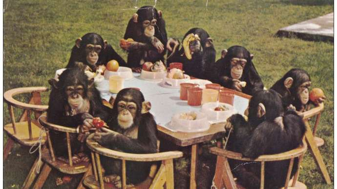 image for Intelligence quotient level at London Brexit celebration expected to mirror 1960s chimp's tea party