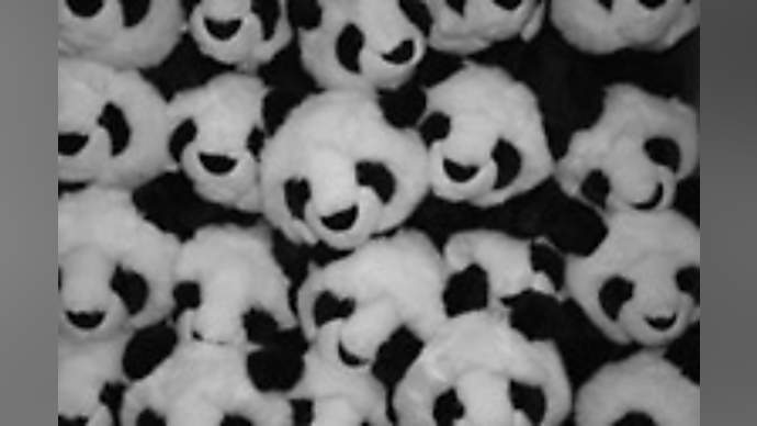 image for Chinese Giant Panda Shock