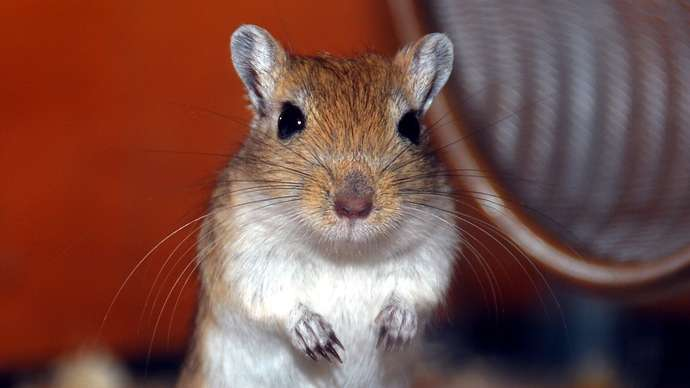 "image for ""Me Too"" Gerbil Claims ""We Ain't Gonna Take This Sitting Down."""
