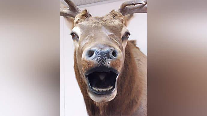 image for Drunken Moose Stuck in Apple Tree in Sweden, Entertains Crowds