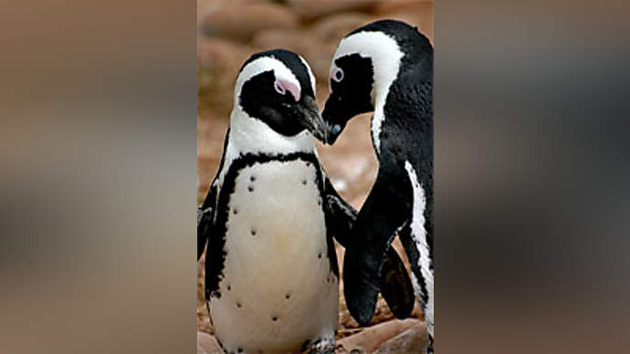 """image for US Vows To Kill All Penguins - """"They just look like they're planning something all the time,"""" Says Bush"""