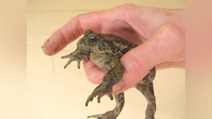 image for Local Toad Escapes Godzilla's Grasp in Frantic Pissing Frenzy