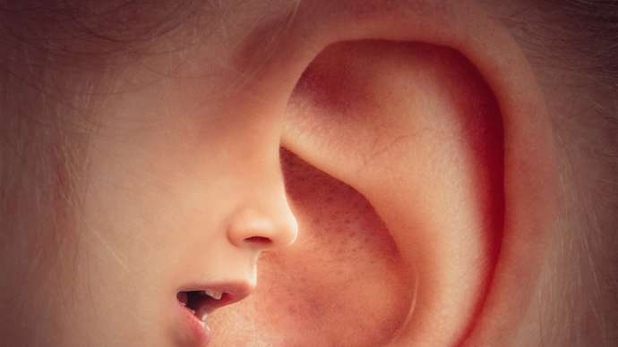 image for Earring Manufacturers produces gene to give Humans 6 Ears