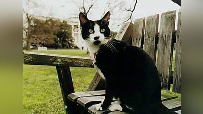 image for Socks Speaks Out: Clintons' White House Cat Speaks Through Pet Psychic