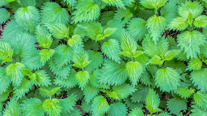image for Boy Fell Into Patch Of Nettles