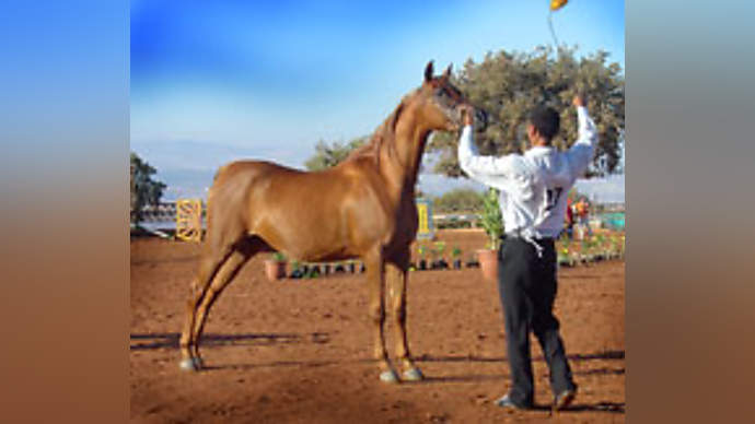 image for Qatari shaikh falls for $8 million talking horse