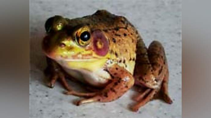 """image for Kate tells pals: """"When I kissed Prince Charming he turned into a frog"""""""