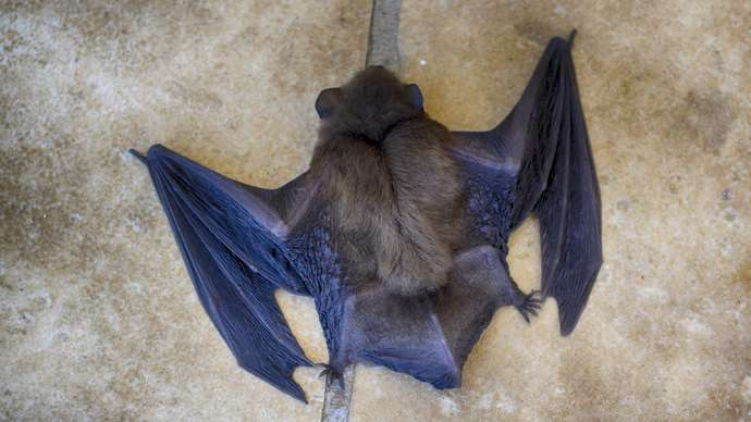image for Bat Soup Taken Off Menu At Chinese Restaurants