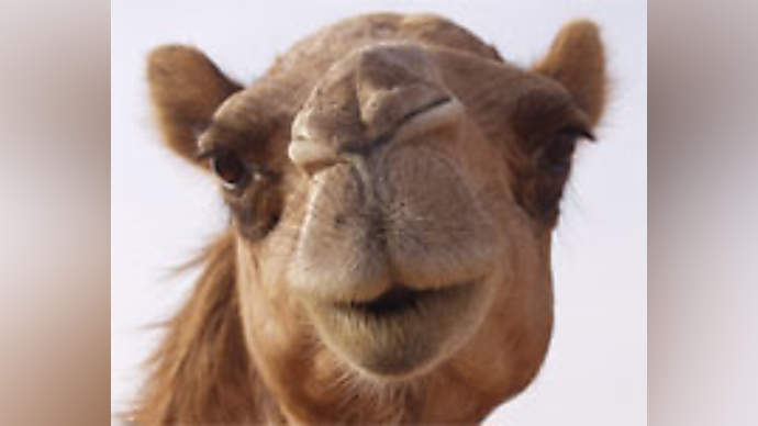 image for US Tomahawk Missiles Hit Iran Transportation Hub: 21 Camels Destroyed
