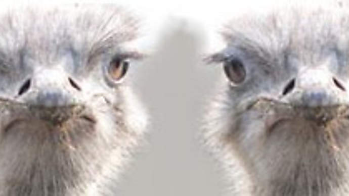 image for Three London teenage girls kidnapped by swooping ISIS eagles!
