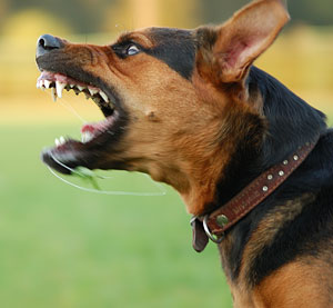 image for Boy Hurt After Putting His Head In Alsation Dog's Mouth