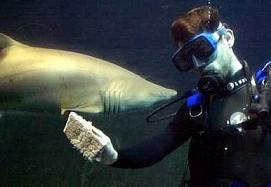 image for Shark-cleaning in Australia