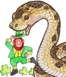 image for United Nations to Reintroduce Snakes to Ireland