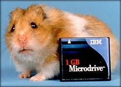 image for Patients Succumb To Rodent Disease