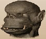 image for Shrek 2 faces global boycott