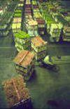 image for World Flower Market in Crisis!