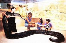 image for Bill and Melinda Gate's 33 ft 'Guard Python' swallows intruder Alive