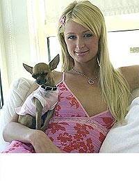 image for Paris Hilton's Dog Inspires Chihuahua Leather Fashion