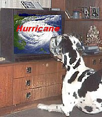 image for Hurricane Andrea Already Forming