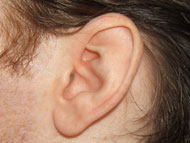 "image for ""Off Switch"" Evolving in Men's Ears"