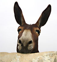 image for Prime minister appoints donkey as Lord Chancellor