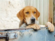 image for Can dogs really look 'guilty'?