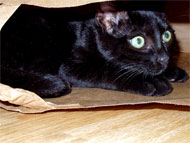 image for Cat found alive after month in metal box: was Schrödinger wrong?
