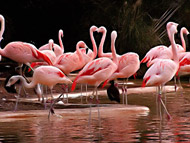 image for Lindsay Lohan Has Purchased A Flock of Flamingos Which She Plans To Breed In Order To Stay Out of Trouble
