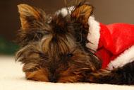 image for Macy's Pulls Fur Coats Made of Dog Pelts