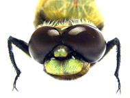 "image for Pesticides creating dangerous ""Super Fly"""