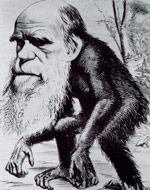 "image for Fossil of ""Missing Link"" Between Humans and Apes Found with Darwin's Possessions!"