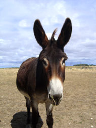image for Donkey saved in Lincolnshire claims he's Jesus's donkey!