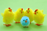 image for Easter solution sought over marshmallow chick embryo vote