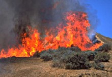 image for Rice and Webber back together for 'Basra's Burning' musical