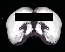 image for Asteroid Moons Earth
